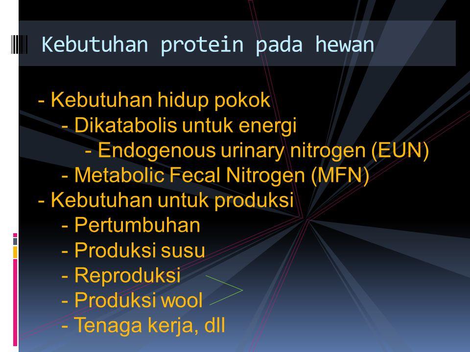 Kebutuhan protein pada hewan - Kebutuhan hidup pokok - Dikatabolis untuk energi - Endogenous urinary nitrogen (EUN) - Metabolic Fecal Nitrogen (MFN) -