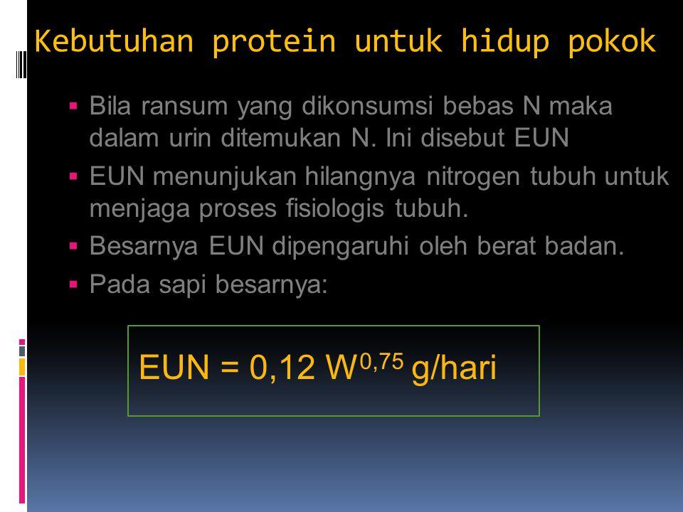 Kebutuhan protein untuk hidup pokok  Bila ransum yang dikonsumsi bebas N maka dalam urin ditemukan N. Ini disebut EUN  EUN menunjukan hilangnya nitr