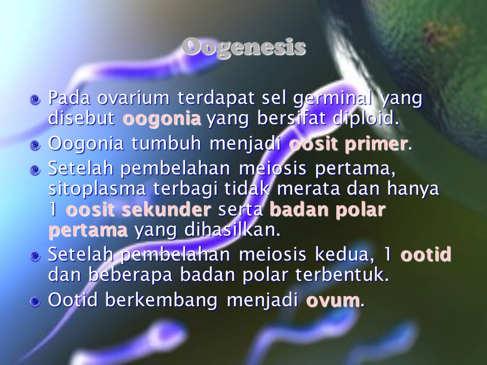 Oogenesis Pada ovarium terdapat sel germinal yang disebut oogonia yang bersifat diploid. Oogonia tumbuh menjadi oosit primer. Setelah pembelahan meios