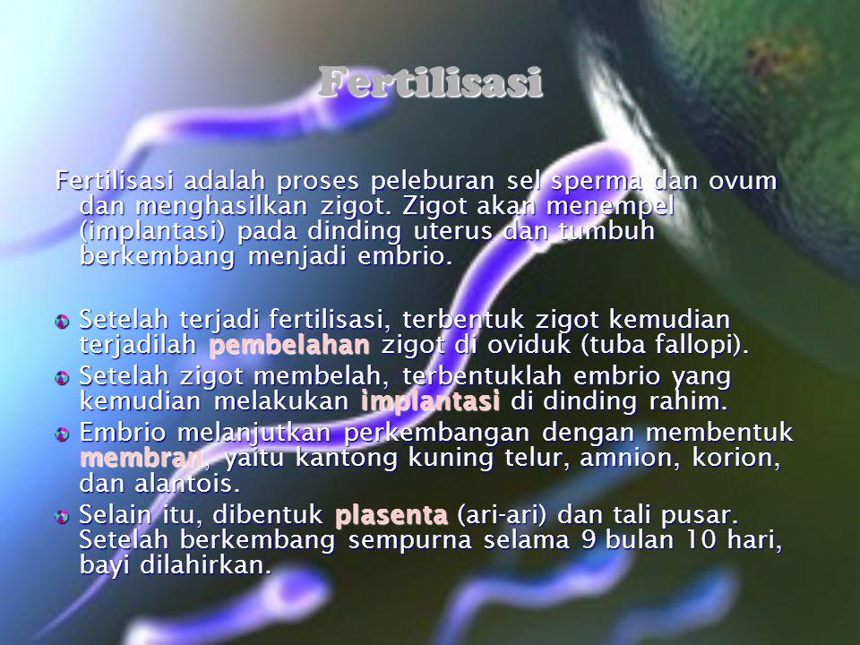 Fertilisasi Fertilisasi adalah proses peleburan sel sperma dan ovum dan menghasilkan zigot. Zigot akan menempel (implantasi) pada dinding uterus dan t