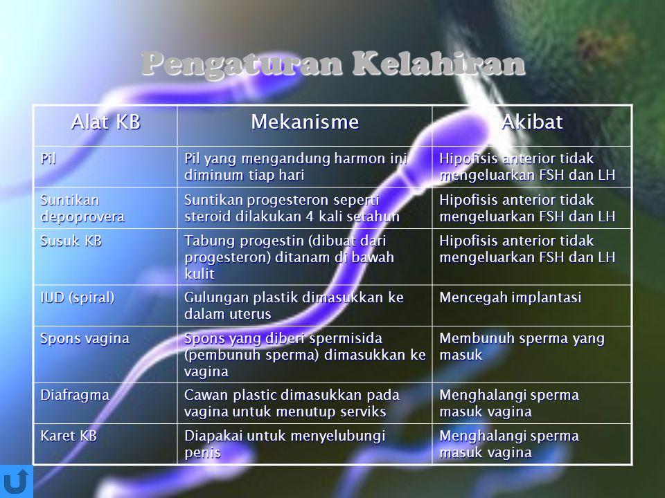 Pengaturan Kelahiran Alat KB MekanismeAkibat Pil Pil yang mengandung harmon ini diminum tiap hari Hipofisis anterior tidak mengeluarkan FSH dan LH Sun