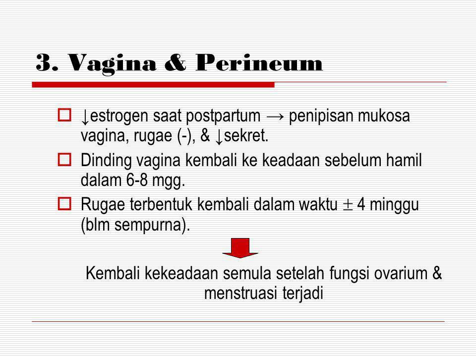 2. SERVIKS  18 jam postpartum serviks kembali ke bentuk semula.  Serviks naik ke bagian segmen bawah uterus menyisakan edema, tebal, dan rapuh untuk