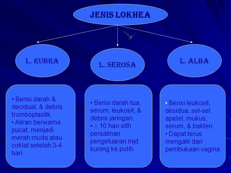 JENIS LOKHEA l.rUBRA l. sEROSA L.