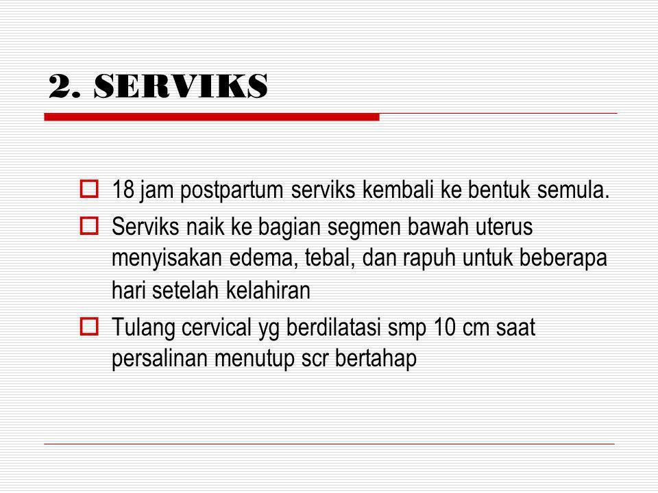 2.SERVIKS  18 jam postpartum serviks kembali ke bentuk semula.