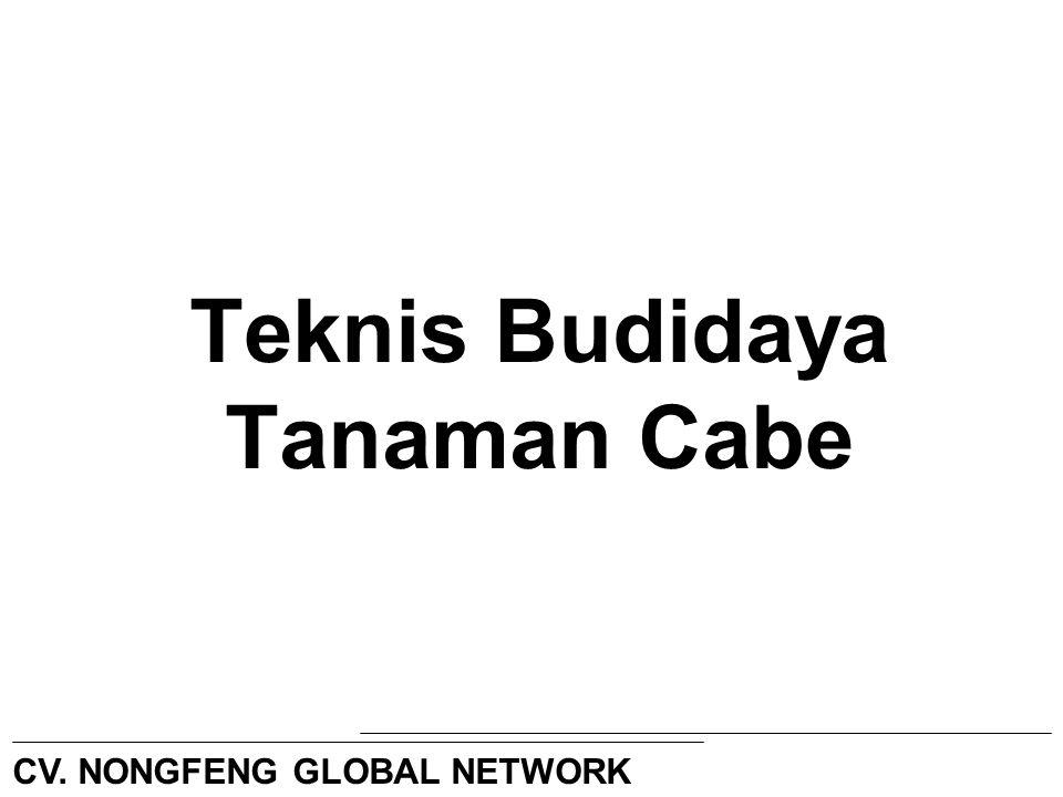 Teknis Budidaya Tanaman Cabe CV. NONGFENG GLOBAL NETWORK