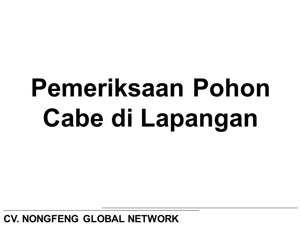 Pemeriksaan Pohon Cabe di Lapangan CV. NONGFENG GLOBAL NETWORK