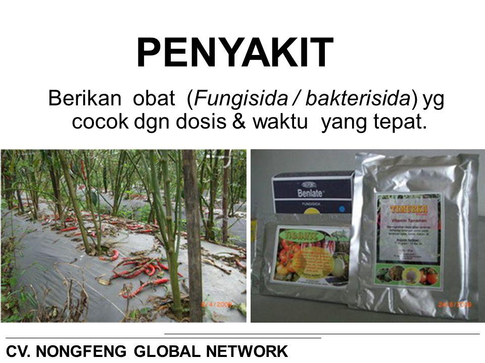 Berikan obat (Fungisida / bakterisida) yg cocok dgn dosis & waktu yang tepat. CV. NONGFENG GLOBAL NETWORK PENYAKIT