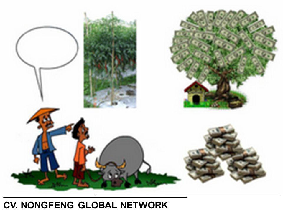 Lihat… Ternyata pohon Cabe adalah Pohon uang = CV. NONGFENG GLOBAL NETWORK