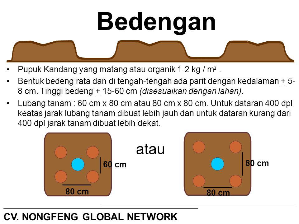 Bedengan Pupuk Kandang yang matang atau organik 1-2 kg / m. Bentuk bedeng rata dan di tengah-tengah ada parit dengan kedalaman + 5- 8 cm. Tinggi beden