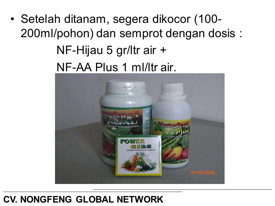 Setelah tanaman bercabang kemudian dikocor (200ml/pohon) dan semprot dengan dosis : NF-Buah 5 gr/ltr air + NF-KalsiN 2 gr/ltr air + NF-AA Plus 1 ml/ltr air Interval 7 hari terus sampai selesai.