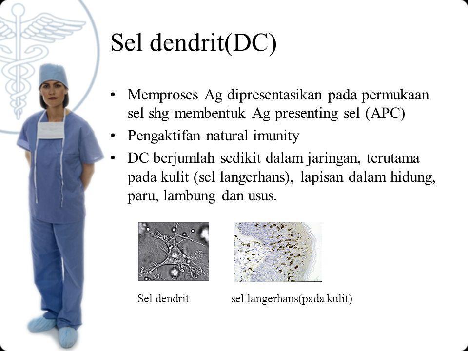 Sel dendrit(DC) Memproses Ag dipresentasikan pada permukaan sel shg membentuk Ag presenting sel (APC) Pengaktifan natural imunity DC berjumlah sedikit dalam jaringan, terutama pada kulit (sel langerhans), lapisan dalam hidung, paru, lambung dan usus.