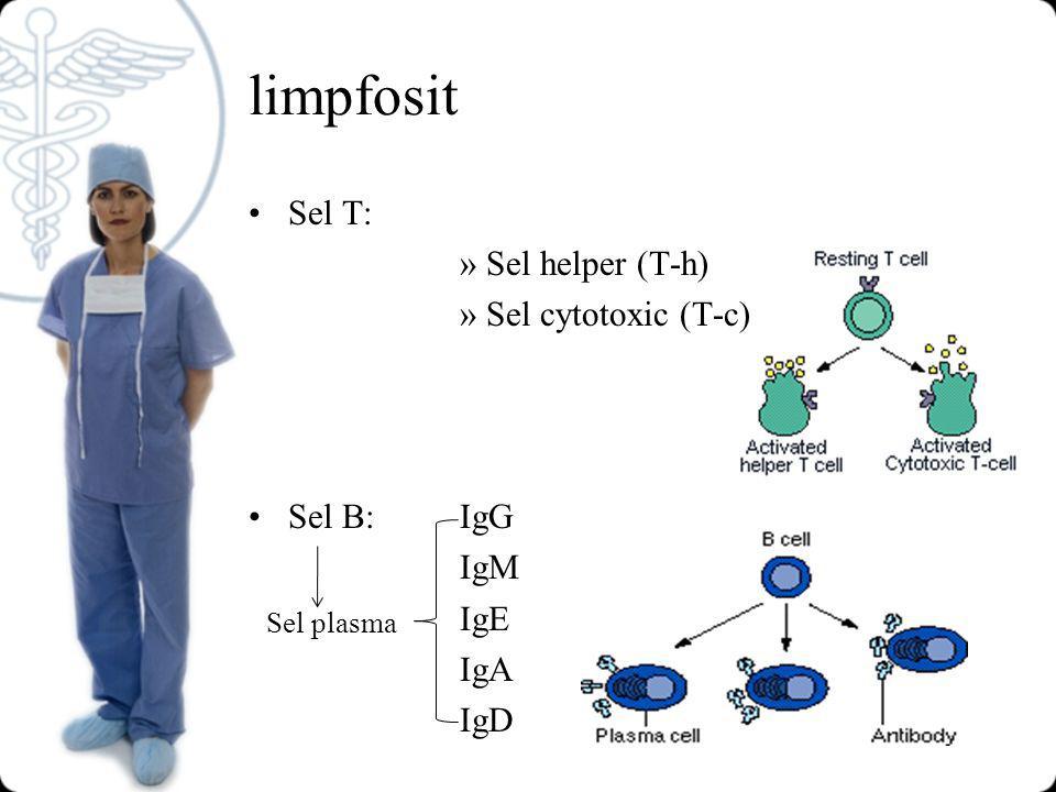 limpfosit Sel T: »Sel helper (T-h) »Sel cytotoxic (T-c) Sel B:IgG IgM IgE IgA IgD Sel plasma
