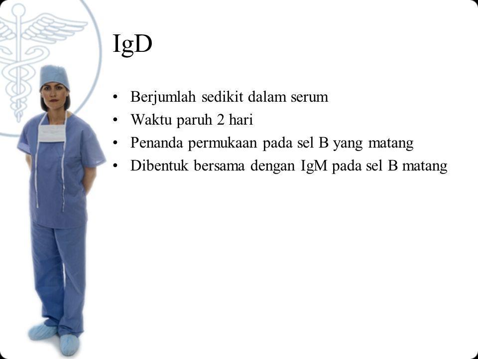 IgD Berjumlah sedikit dalam serum Waktu paruh 2 hari Penanda permukaan pada sel B yang matang Dibentuk bersama dengan IgM pada sel B matang