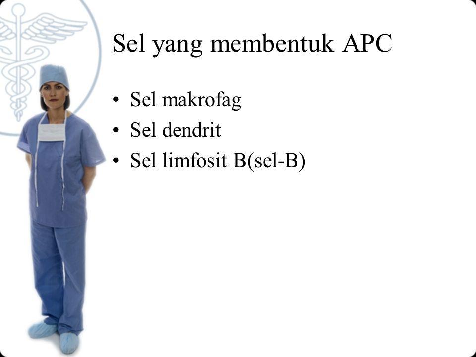 Sel yang membentuk APC Sel makrofag Sel dendrit Sel limfosit B(sel-B)