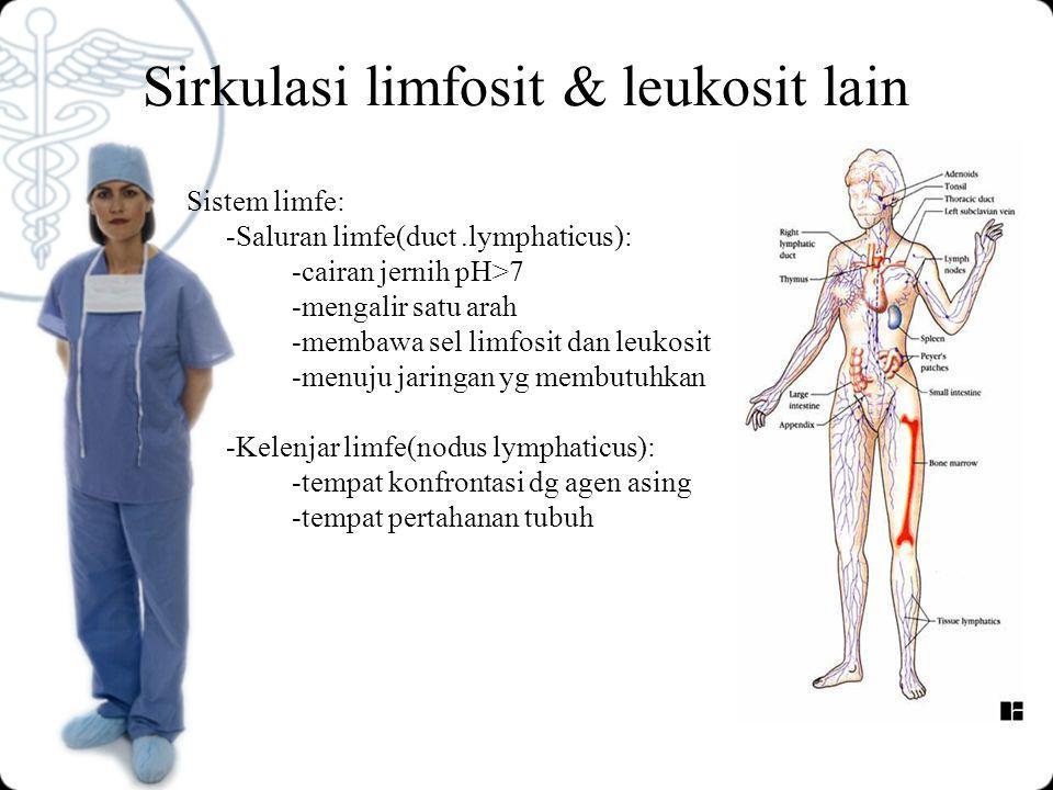 Sirkulasi limfosit & leukosit lain Sistem limfe: -Saluran limfe(duct.lymphaticus): -cairan jernih pH>7 -mengalir satu arah -membawa sel limfosit dan leukosit -menuju jaringan yg membutuhkan -Kelenjar limfe(nodus lymphaticus): -tempat konfrontasi dg agen asing -tempat pertahanan tubuh