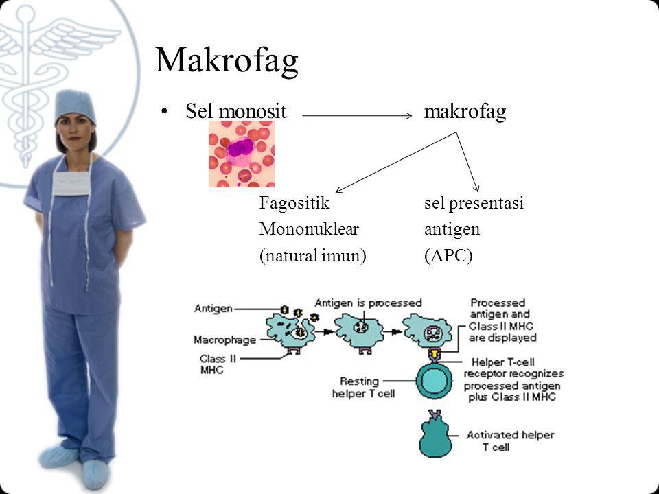 Sel NK (natural killer) Granuler limfosit besar Sel null (tanpa tanda permukaan) Ada dlm darah & organ limfoid perifer Membunuh sel terinfeksi virus dan sel tumor Mempunyai reseptor permukaan (IgGFc)
