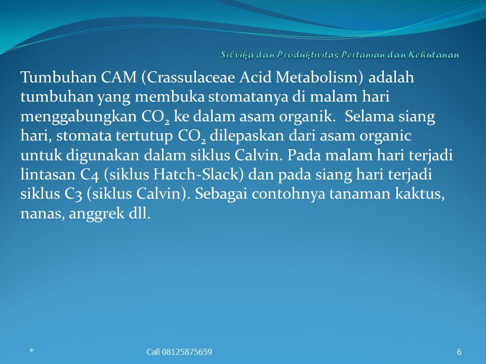Tumbuhan CAM (Crassulaceae Acid Metabolism) adalah tumbuhan yang membuka stomatanya di malam hari menggabungkan CO 2 ke dalam asam organik. Selama sia