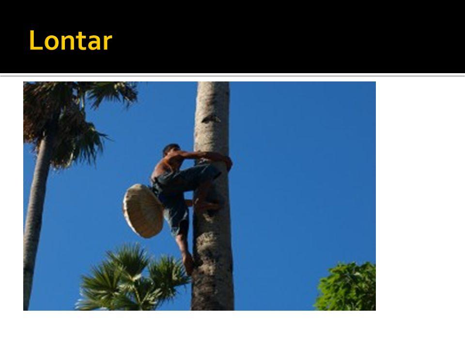 Seorang bapak menaiki pohon Lontar untuk menyadap Nira. Lontar adalah pohon kehidupan bagi penduduk Nusa Tenggara Timur, Setiap bagianya bisa dibuat b