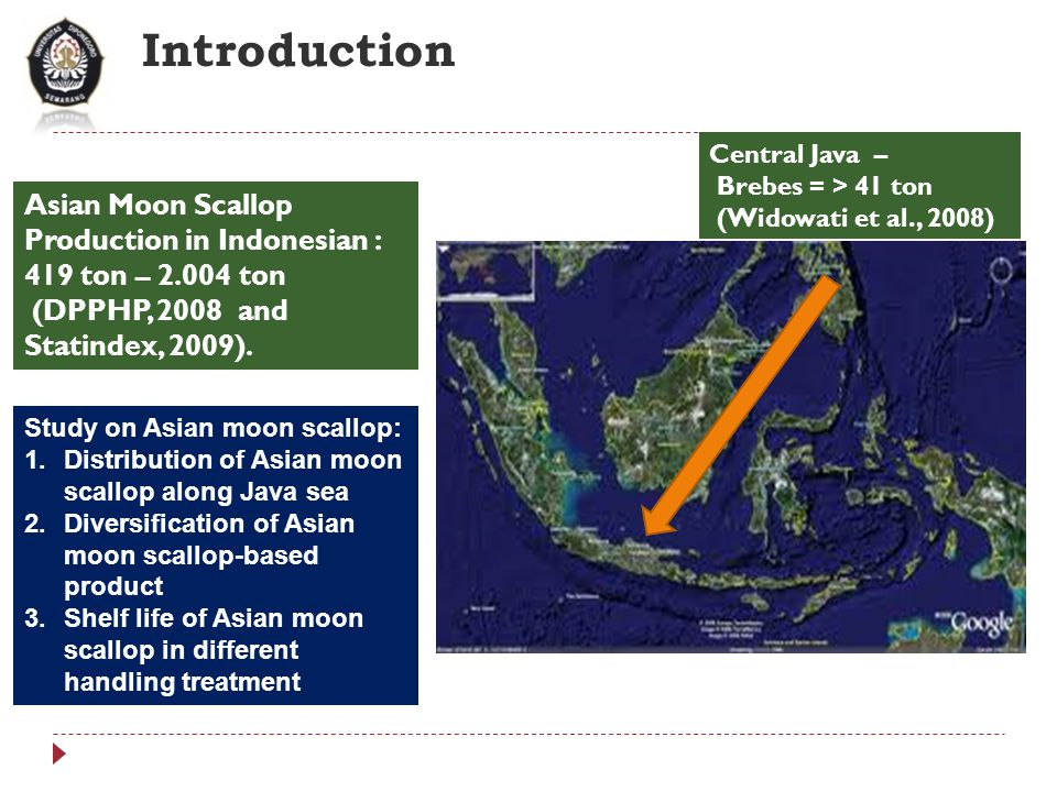 Introduction Asian Moon Scallop Production in Indonesian : 419 ton – 2.004 ton (DPPHP, 2008 and Statindex, 2009).