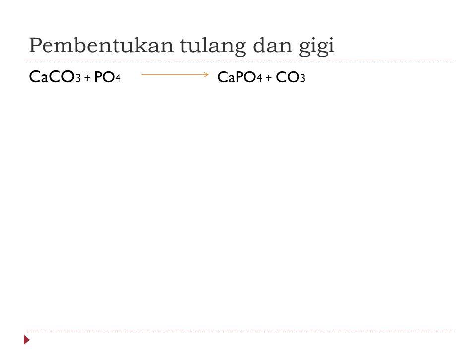 Pembentukan tulang dan gigi CaCO 3 + PO 4 CaPO 4 + CO 3