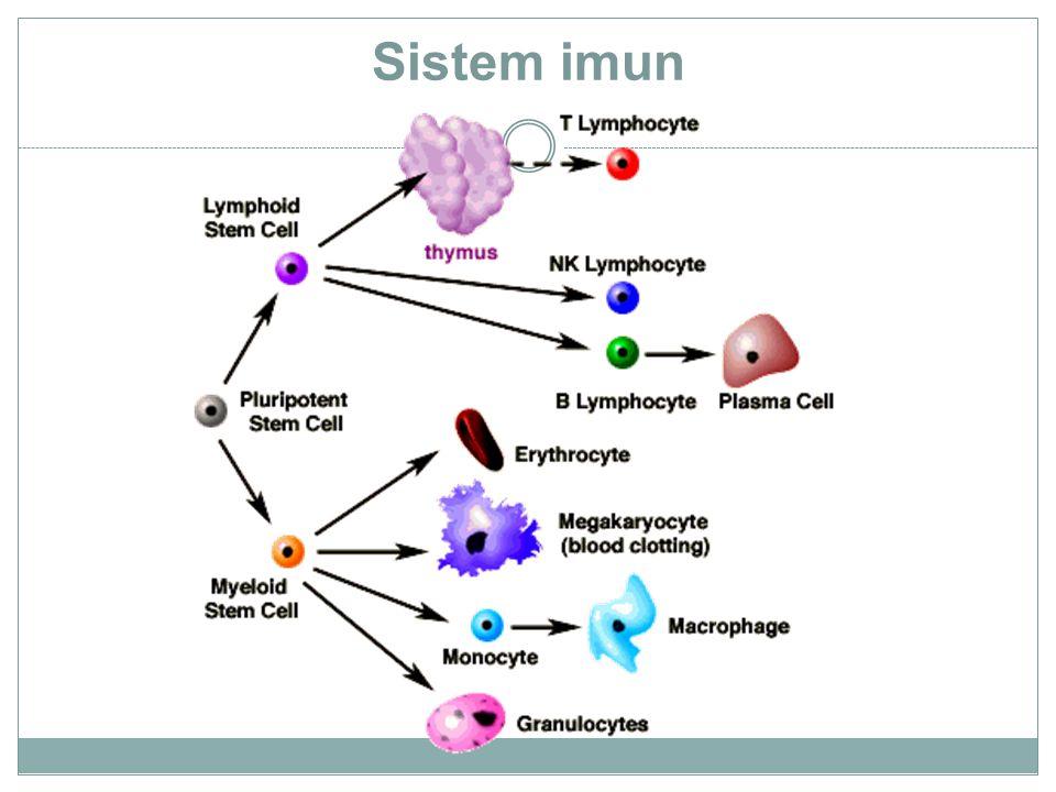 Immuniti dan respon sistem imunm