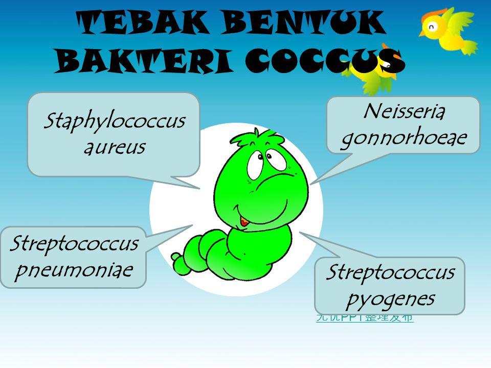 无忧 PPT 整理发布 TEBAK BENTUK BAKTERI COCCUS Staphylococcus aureus Streptococcus pneumoniae Neisseria gonnorhoeae Streptococcus pyogenes
