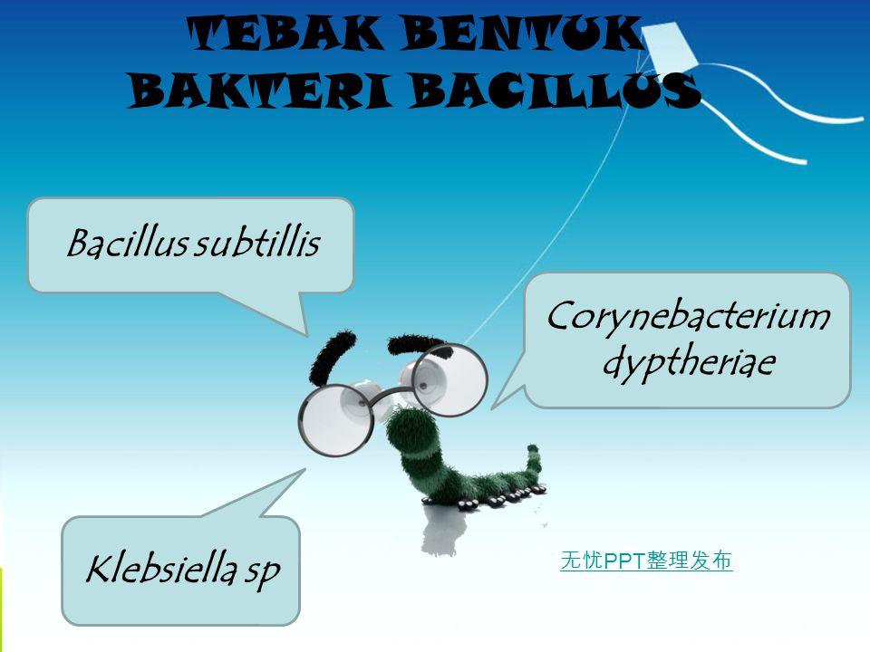 无忧 PPT 整理发布 TEBAK BENTUK BAKTERI BACILLUS Klebsiella sp Bacillus subtillis Corynebacterium dyptheriae