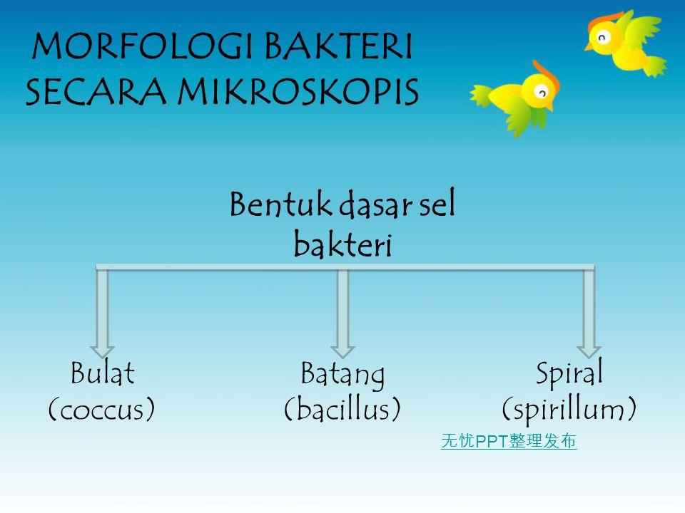 无忧 PPT 整理发布 MORFOLOGI BAKTERI SECARA MIKROSKOPIS Bentuk dasar sel bakteri Bulat (coccus) Batang (bacillus) Spiral (spirillum)