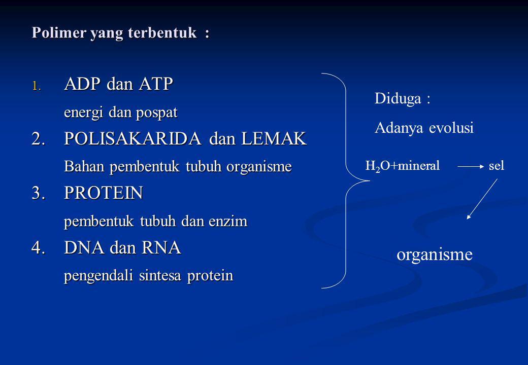 Polimer yang terbentuk : 1. ADP dan ATP energi dan pospat 2.POLISAKARIDA dan LEMAK Bahan pembentuk tubuh organisme 3.PROTEIN pembentuk tubuh dan enzim