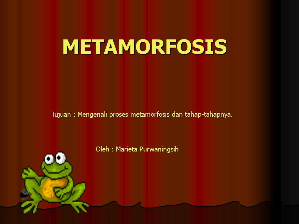 METAMORFOSIS Tujuan : Mengenali proses metamorfosis dan tahap-tahapnya. Oleh : Marieta Purwaningsih Oleh : Marieta Purwaningsih