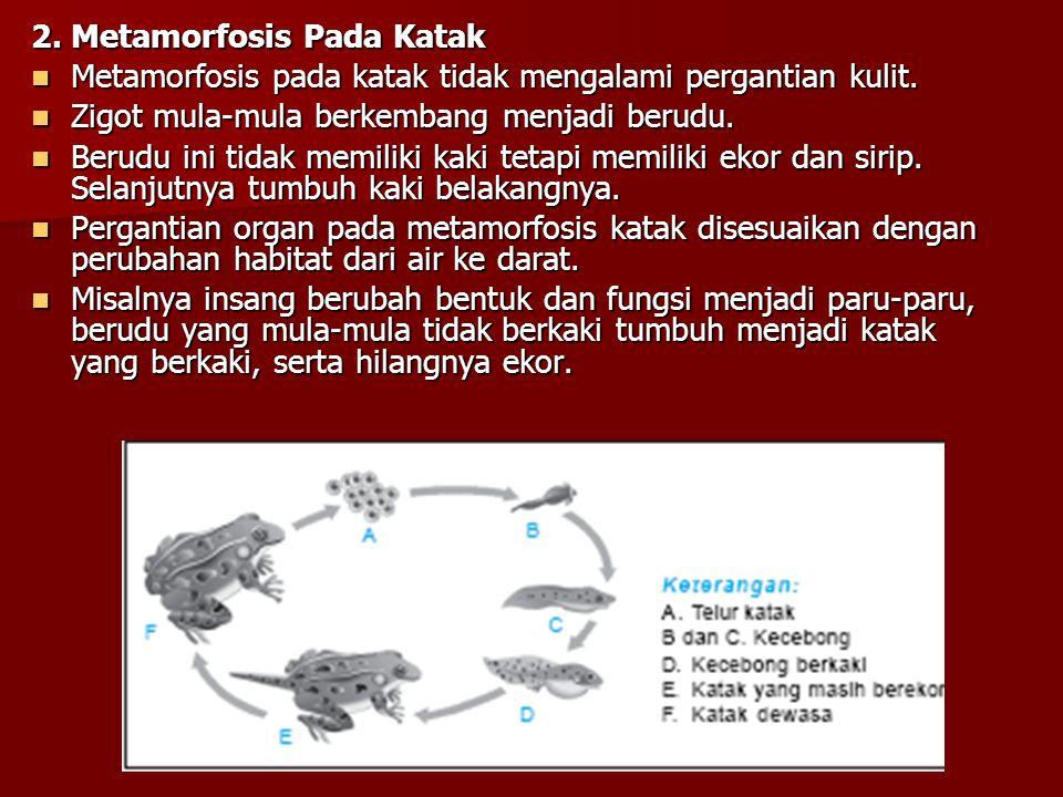 2. Metamorfosis Pada Katak Metamorfosis pada katak tidak mengalami pergantian kulit. Metamorfosis pada katak tidak mengalami pergantian kulit. Zigot m