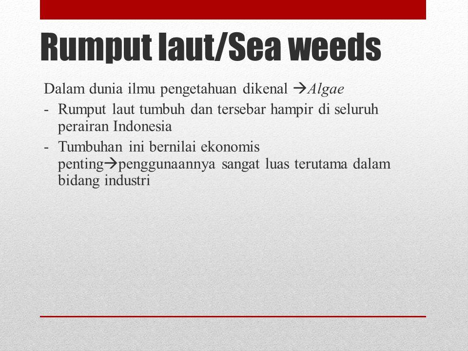 Rumput laut/Sea weeds Dalam dunia ilmu pengetahuan dikenal  Algae -Rumput laut tumbuh dan tersebar hampir di seluruh perairan Indonesia -Tumbuhan ini