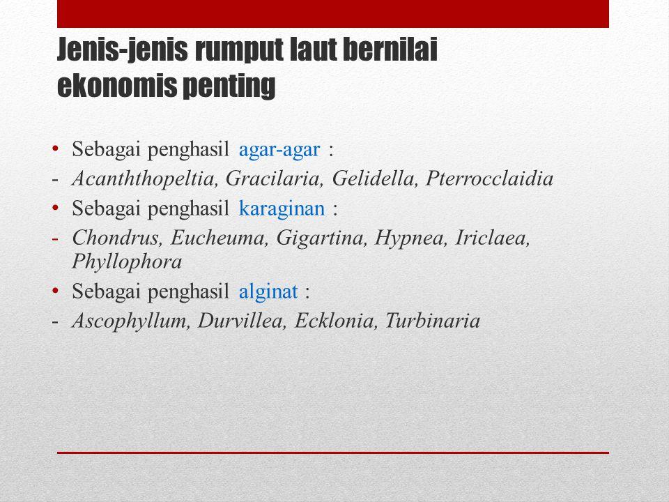 Jenis-jenis rumput laut bernilai ekonomis penting Sebagai penghasil agar-agar : -Acanththopeltia, Gracilaria, Gelidella, Pterrocclaidia Sebagai pengha