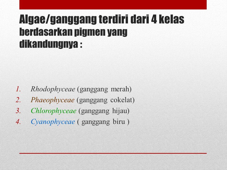 Algae/ganggang terdiri dari 4 kelas berdasarkan pigmen yang dikandungnya : 1.Rhodophyceae (ganggang merah) 2.Phaeophyceae (ganggang cokelat) 3.Chlorop