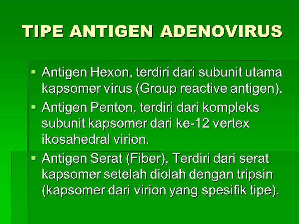 TIPE ANTIGEN ADENOVIRUS  Antigen Hexon, terdiri dari subunit utama kapsomer virus (Group reactive antigen).  Antigen Penton, terdiri dari kompleks s