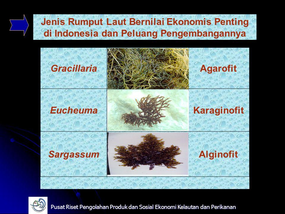 GracillariaAgarofit EucheumaKaraginofit SargassumAlginofit Jenis Rumput Laut Bernilai Ekonomis Penting di Indonesia dan Peluang Pengembangannya Pusat