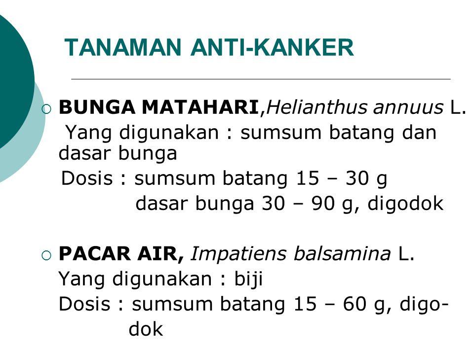 TANAMAN ANTI-KANKER  BUNGA MATAHARI,Helianthus annuus L. Yang digunakan : sumsum batang dan dasar bunga Dosis : sumsum batang 15 – 30 g dasar bunga 3