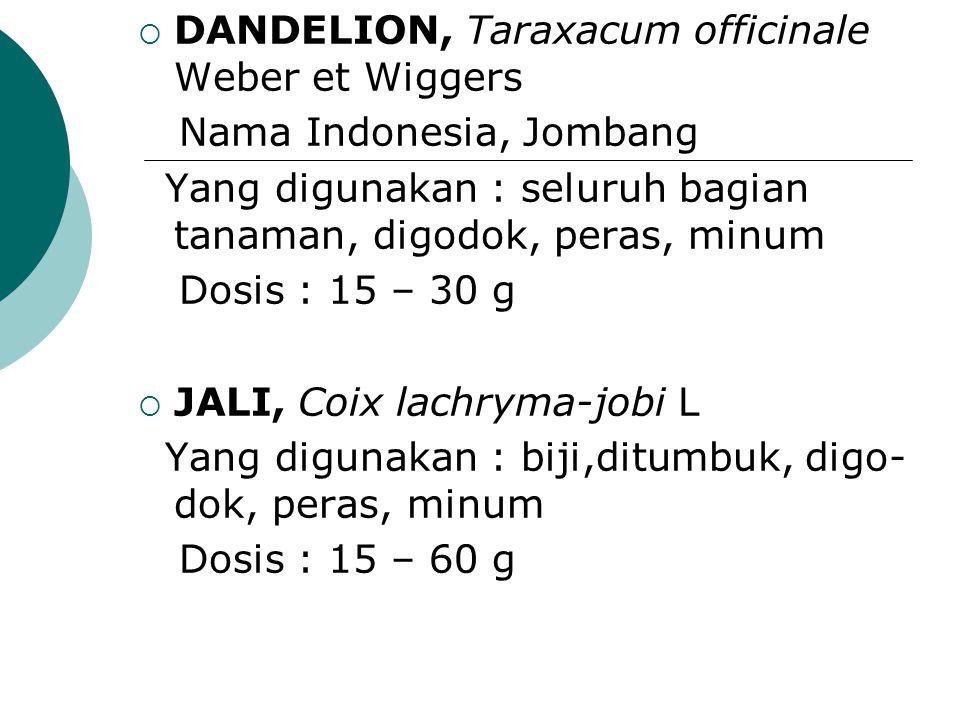  DANDELION, Taraxacum officinale Weber et Wiggers Nama Indonesia, Jombang Yang digunakan : seluruh bagian tanaman, digodok, peras, minum Dosis : 15 –
