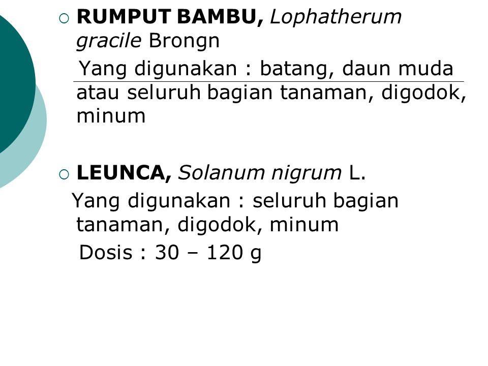  RUMPUT BAMBU, Lophatherum gracile Brongn Yang digunakan : batang, daun muda atau seluruh bagian tanaman, digodok, minum  LEUNCA, Solanum nigrum L.