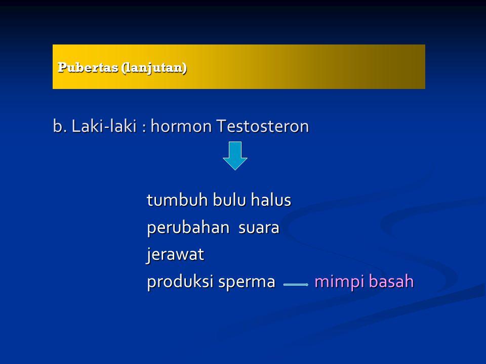 b. Laki-laki : hormon Testosteron tumbuh bulu halus perubahan suara jerawat produksi sperma mimpi basah Pubertas (lanjutan)