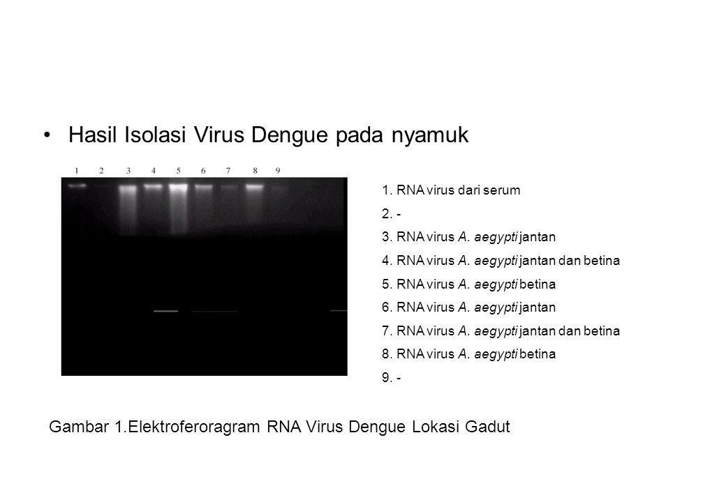 Hasil Isolasi Virus Dengue pada nyamuk Gambar 1.Elektroferoragram RNA Virus Dengue Lokasi Gadut 1. RNA virus dari serum 2. - 3. RNA virus A. aegypti j