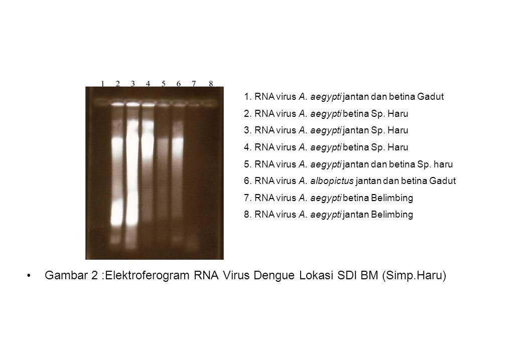 Gambar 2 :Elektroferogram RNA Virus Dengue Lokasi SDI BM (Simp.Haru) 1. RNA virus A. aegypti jantan dan betina Gadut 2. RNA virus A. aegypti betina Sp
