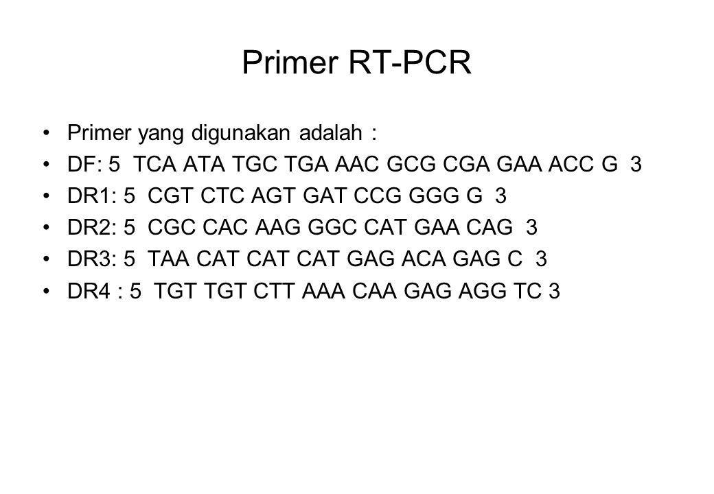 Primer RT-PCR Primer yang digunakan adalah : DF: 5 TCA ATA TGC TGA AAC GCG CGA GAA ACC G 3 DR1: 5 CGT CTC AGT GAT CCG GGG G 3 DR2: 5 CGC CAC AAG GGC C