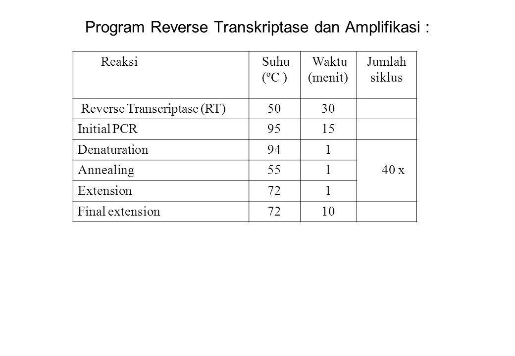 Program Reverse Transkriptase dan Amplifikasi : Reaksi Suhu (ºC ) Waktu (menit) Jumlah siklus Reverse Transcriptase (RT)5030 Initial PCR9515 Denaturat