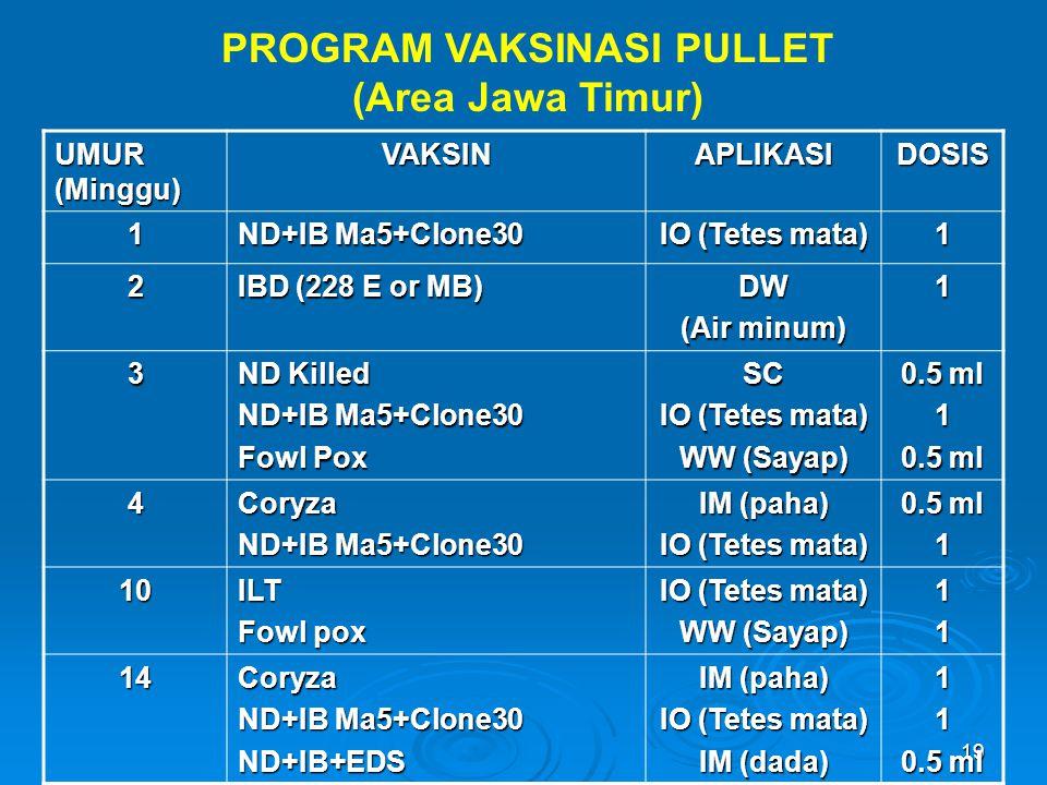 19 PROGRAM VAKSINASI PULLET (Area Jawa Timur) UMUR (Minggu) VAKSINAPLIKASIDOSIS 1 ND+IB Ma5+Clone30 IO (Tetes mata) 1 2 IBD (228 E or MB) DW (Air minu