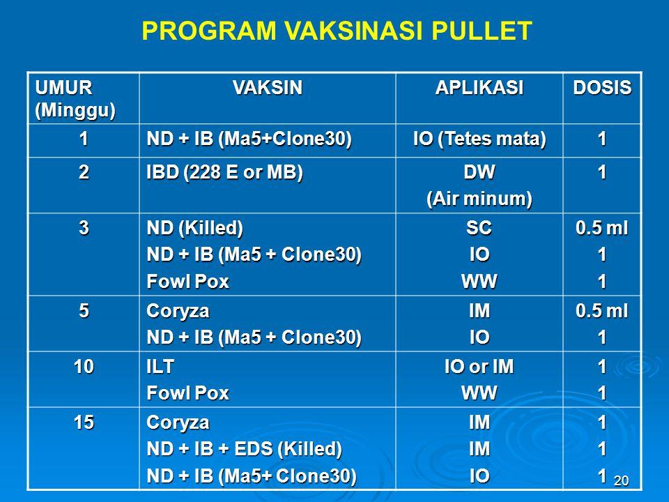 20 PROGRAM VAKSINASI PULLET UMUR (Minggu) VAKSINAPLIKASIDOSIS 1 ND + IB (Ma5+Clone30) IO (Tetes mata) 1 2 IBD (228 E or MB) DW (Air minum) 1 3 ND (Kil