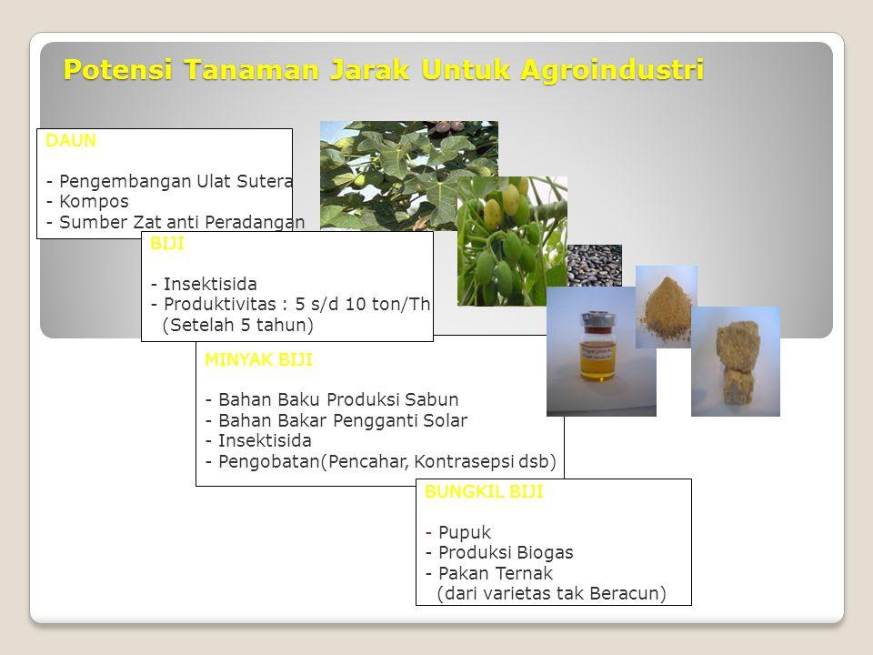 Potensi Tanaman Jarak Untuk Agroindustri DAUN - Pengembangan Ulat Sutera - Kompos - Sumber Zat anti Peradangan MINYAK BIJI - Bahan Baku Produksi Sabun