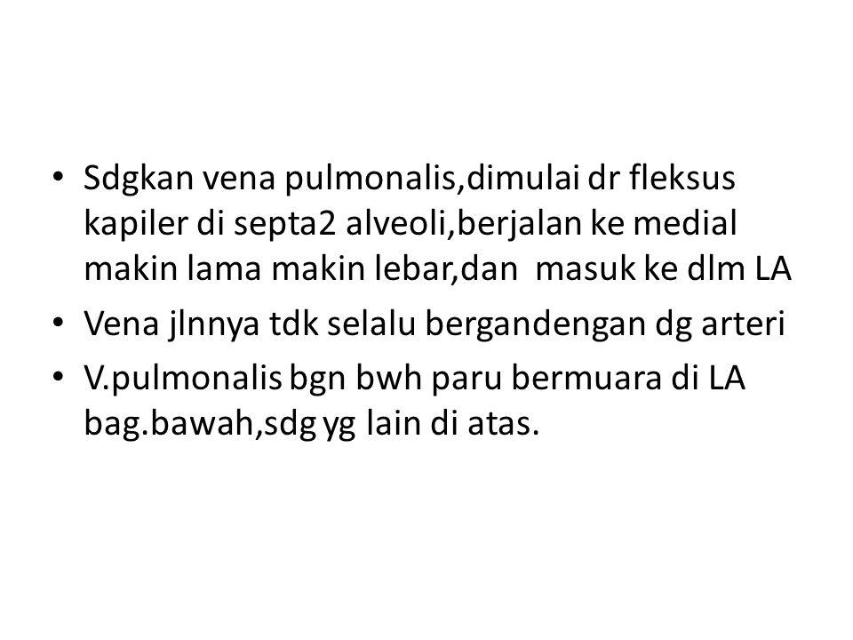 Sdgkan vena pulmonalis,dimulai dr fleksus kapiler di septa2 alveoli,berjalan ke medial makin lama makin lebar,dan masuk ke dlm LA Vena jlnnya tdk sela