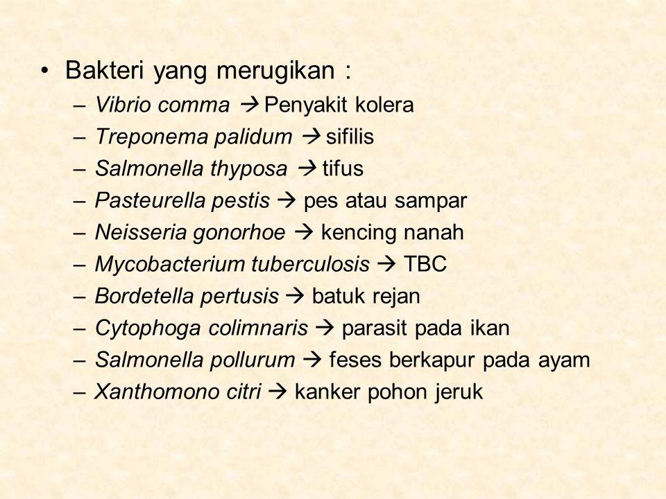 Bakteri yang merugikan : –Vibrio comma  Penyakit kolera –Treponema palidum  sifilis –Salmonella thyposa  tifus –Pasteurella pestis  pes atau sampar –Neisseria gonorhoe  kencing nanah –Mycobacterium tuberculosis  TBC –Bordetella pertusis  batuk rejan –Cytophoga colimnaris  parasit pada ikan –Salmonella pollurum  feses berkapur pada ayam –Xanthomono citri  kanker pohon jeruk