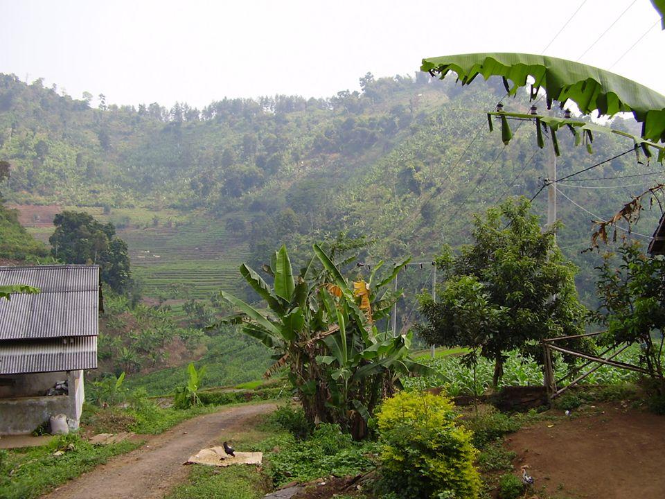 ANGKA KEMATIAN BAYI JAWA TIMUR 2008